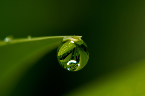 Morning Dew: Bringing the Whole Tithe into the Storehouse